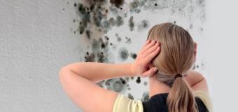 Gode erfaringer med fjernelse af skimmelsvamp deles online